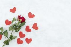 Τριαντάφυλλα στο χιόνι Στοκ φωτογραφία με δικαίωμα ελεύθερης χρήσης