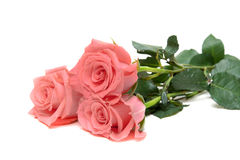 τριαντάφυλλα τρία στοκ εικόνα με δικαίωμα ελεύθερης χρήσης