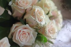 τριαντάφυλλα Στοκ φωτογραφίες με δικαίωμα ελεύθερης χρήσης