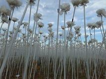 10000 τριαντάφυλλα Cordova Κεμπού Στοκ Εικόνα