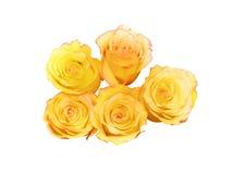 τριαντάφυλλα yelow Στοκ φωτογραφίες με δικαίωμα ελεύθερης χρήσης