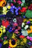 τριαντάφυλλα ανασκόπηση&sigm στοκ φωτογραφία