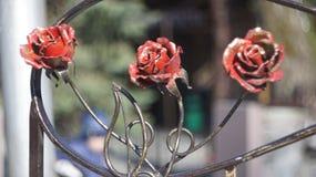 Τριαντάφυλλα ενός χάλυβα Στοκ Φωτογραφία
