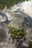 Τριαντάφυλλα και αντανακλάσεις των σύννεφων στη λίμνη Στοκ εικόνες με δικαίωμα ελεύθερης χρήσης