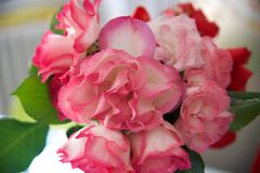 Τριαντάφυλλα 2$ος Στοκ Φωτογραφία