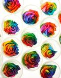Τριαντάφυλλα ουράνιων τόξων σε ακατέργαστο Στοκ φωτογραφίες με δικαίωμα ελεύθερης χρήσης