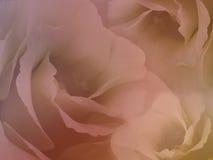 Τριαντάφυλλα λουλουδιών στο μουτζουρωμένο κόκκινο υπόβαθρο Κόκκινος-κίτρινα λουλούδια τριαντάφυλλων floral κολάζ convolvulus σύνθ Στοκ εικόνες με δικαίωμα ελεύθερης χρήσης