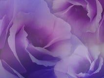 Τριαντάφυλλα λουλουδιών στο μουτζουρωμένο πορτοκαλής-πράσινο υπόβαθρο Άσπρα λουλούδια τριαντάφυλλων floral κολάζ convolvulus σύνθ Στοκ εικόνες με δικαίωμα ελεύθερης χρήσης