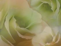 Τριαντάφυλλα λουλουδιών στο μουτζουρωμένο πορτοκαλής-πράσινο υπόβαθρο Άσπρα λουλούδια τριαντάφυλλων floral κολάζ convolvulus σύνθ Στοκ Φωτογραφίες