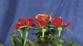 Τριαντάφυλλα που ανθίζουν φιλμ μικρού μήκους