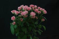 Τριαντάφυλλα σε ένα μαύρο υπόβαθρο Στοκ εικόνες με δικαίωμα ελεύθερης χρήσης