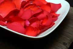 Τριαντάφυλλα σε μια κινηματογράφηση σε πρώτο πλάνο υποβάθρου πιάτων Στοκ εικόνες με δικαίωμα ελεύθερης χρήσης