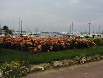 Τριαντάφυλλα στις Κάννες Στοκ φωτογραφίες με δικαίωμα ελεύθερης χρήσης