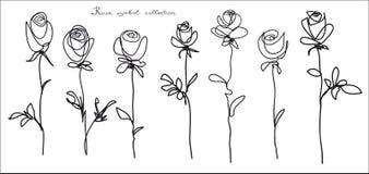 τριαντάφυλλα Συλλογή του σκίτσου λουλουδιών στο άσπρο υπόβαθρο Στοκ Εικόνα