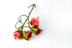 Τριαντάφυλλα, Στοκ φωτογραφίες με δικαίωμα ελεύθερης χρήσης