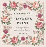Τριαντάφυλλα, chamomile επίσης corel σύρετε το διάνυσμα απεικόνισης Στοκ φωτογραφία με δικαίωμα ελεύθερης χρήσης