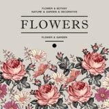 Τριαντάφυλλα, chamomile επίσης corel σύρετε το διάνυσμα απεικόνισης Στοκ εικόνα με δικαίωμα ελεύθερης χρήσης