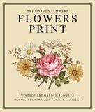Τριαντάφυλλα, chamomile επίσης corel σύρετε το διάνυσμα απεικόνισης Στοκ Φωτογραφίες