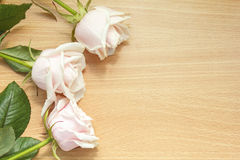 τριαντάφυλλα s μητέρων ημέρα&si Στοκ φωτογραφία με δικαίωμα ελεύθερης χρήσης