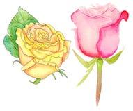Τριαντάφυλλα Watercolor, σύνολο Στοκ Εικόνα