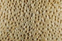 Τριζάτη σύσταση ψωμιού Στοκ φωτογραφίες με δικαίωμα ελεύθερης χρήσης