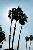 τριπλάσιο δέντρων σκιαγραφιών φοινικών Στοκ εικόνα με δικαίωμα ελεύθερης χρήσης