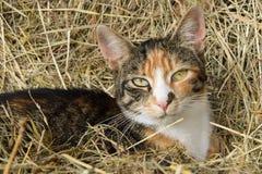 Τριπλή γάτα χρώματος στοκ εικόνες