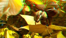 τρισδιάστατα καρύδια άσπρων καρυδιών ανάγλυφων Υπόβαθρο φθινοπώρου της Νίκαιας Κίτρινα φύλλα άσπρων καρυδιών στοκ εικόνες