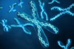 τρισδιάστατα Χ-χρωμοσώματα απεικόνισης με το DNA που φέρνει το γενετικό κώδικα Έννοια γενετικής, έννοια ιατρικής Μέλλον, γενετικό ελεύθερη απεικόνιση δικαιώματος