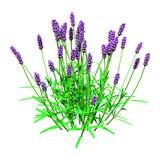 τρισδιάστατα Lavender απόδοσης λουλούδια στο λευκό Στοκ φωτογραφία με δικαίωμα ελεύθερης χρήσης