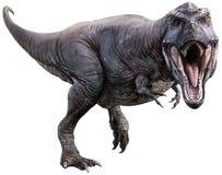 Τρισδιάστατη απεικόνιση βρυχηθμού τυραννοσαύρων rex στοκ εικόνα με δικαίωμα ελεύθερης χρήσης