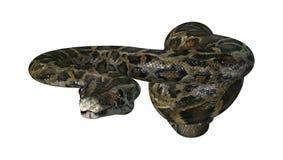 τρισδιάστατη απόδοση βιρμανός Python στο λευκό Στοκ Εικόνες