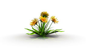 τρισδιάστατη απόδοση μιας αύξησης λουλουδιών ενός άσπρου στούντιο ελεύθερη απεικόνιση δικαιώματος