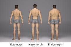 τρισδιάστατη απόδοση: 3 τύπος αρσενικού σώματος, πίσω άποψη διανυσματική απεικόνιση