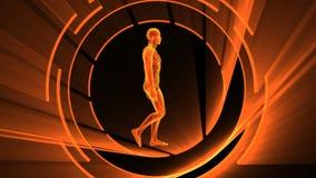 τρισδιάστατη ζωτικότητα της ενήλικης αρσενικής ακτίνας X με τον άνευ ραφής βρόχο απεικόνιση αποθεμάτων