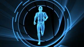 τρισδιάστατη ζωτικότητα της ενήλικης αρσενικής ακτίνας X με τον άνευ ραφής βρόχο ελεύθερη απεικόνιση δικαιώματος