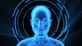 τρισδιάστατη ζωτικότητα της ενήλικης θηλυκής ακτίνας X με τον άνευ ραφής βρόχο απεικόνιση αποθεμάτων