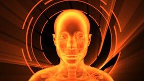 τρισδιάστατη ζωτικότητα της ενήλικης θηλυκής ακτίνας X με τον άνευ ραφής βρόχο διανυσματική απεικόνιση