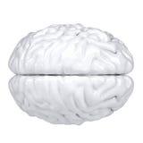 τρισδιάστατος άσπρος ανθρώπινος εγκέφαλος. Όψη από ανωτέρω ελεύθερη απεικόνιση δικαιώματος