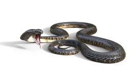 τρισδιάστατος βασιλιάς Cobra το παγκόσμιο ` s μακρύτερο δηλητηριώδες φίδι Στοκ Φωτογραφία