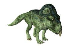 τρισδιάστατος δεινόσαυρος Protoceratops απόδοσης στο λευκό Στοκ εικόνα με δικαίωμα ελεύθερης χρήσης