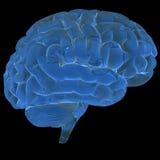 τρισδιάστατος εγκέφαλ&omicro Στοκ Εικόνες