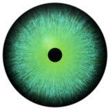 τρισδιάστατος πράσινος βολβός του ματιού επίδρασης, ζωική ομορφιά απεικόνιση αποθεμάτων