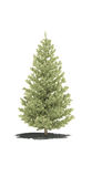 τρισδιάστατο δέντρο πεύκ&omega Απεικόνιση αποθεμάτων