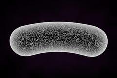 τρισδιάστατο κύτταρο στοκ εικόνα με δικαίωμα ελεύθερης χρήσης