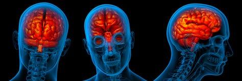 τρισδιάστατο να καταστήσει ιατρικός του εγκεφάλου τρισδιάστατου Στοκ εικόνα με δικαίωμα ελεύθερης χρήσης
