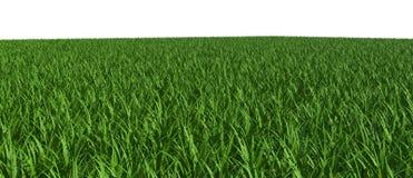 τρισδιάστατο πεδίο πράσιν& Στοκ φωτογραφία με δικαίωμα ελεύθερης χρήσης