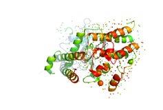 τρισδιάστατο πρότυπο ενός πρωτεϊνικού μορίου απεικόνιση αποθεμάτων