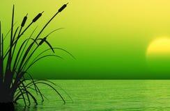 τρισδιάστατο ύδωρ ηλιοβασιλέματος σκηνής φυτών Στοκ Εικόνα