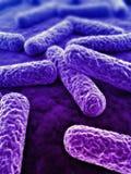 τρισδιάστατα βακτηρίδια Στοκ Εικόνα